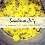 Dandelions: More Than A Weed + Dandelion Jelly Recipe