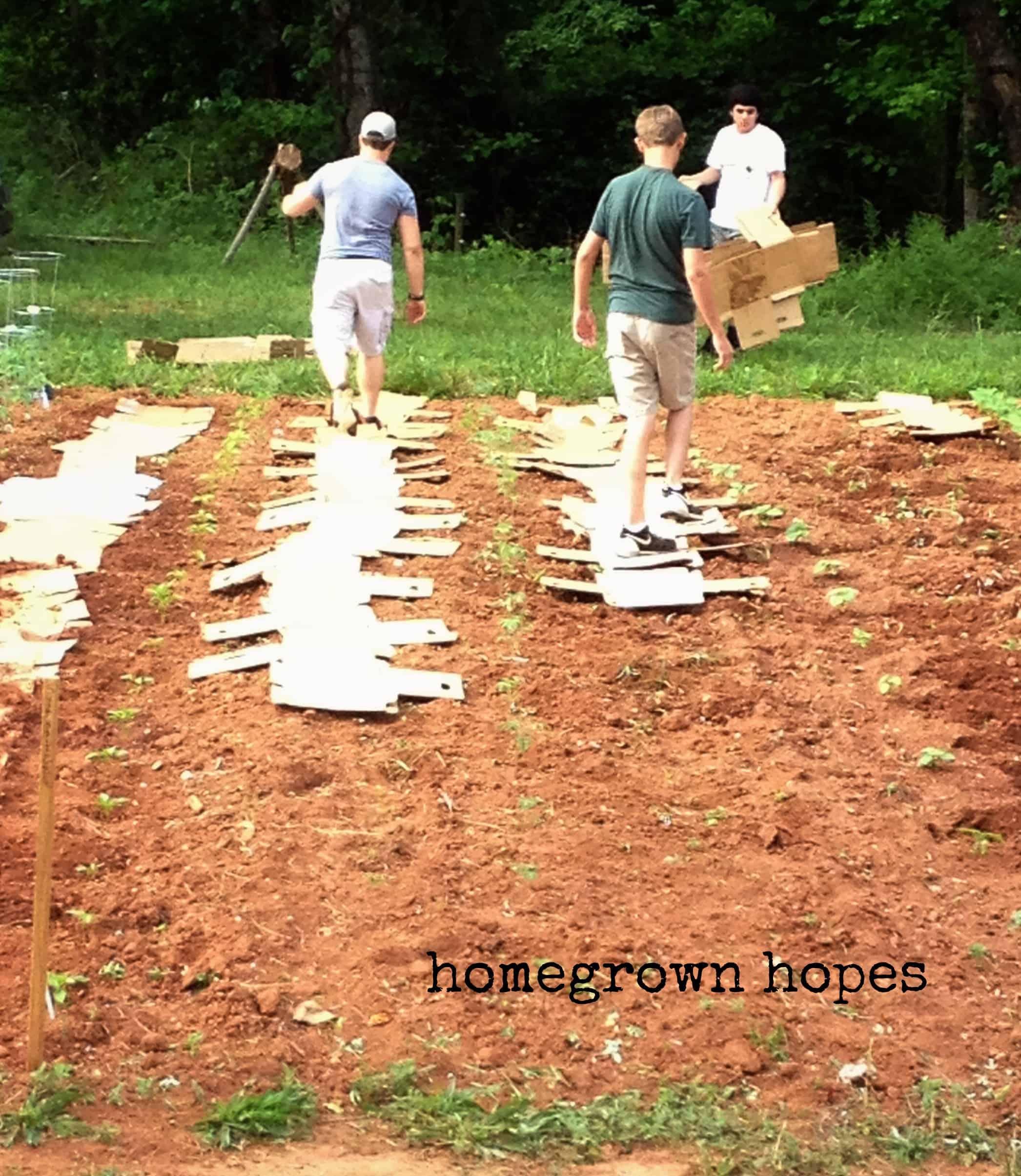 using cardboard as weed control in garden