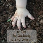 10 Tips for Gardening in Dry Weather