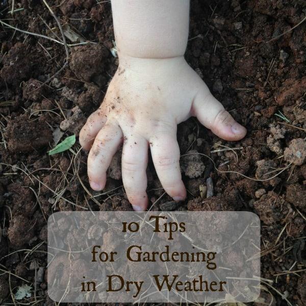 baby hand in garden dirt