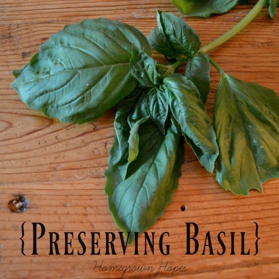 basil leaves on wooden surface