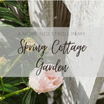 spring garden peony