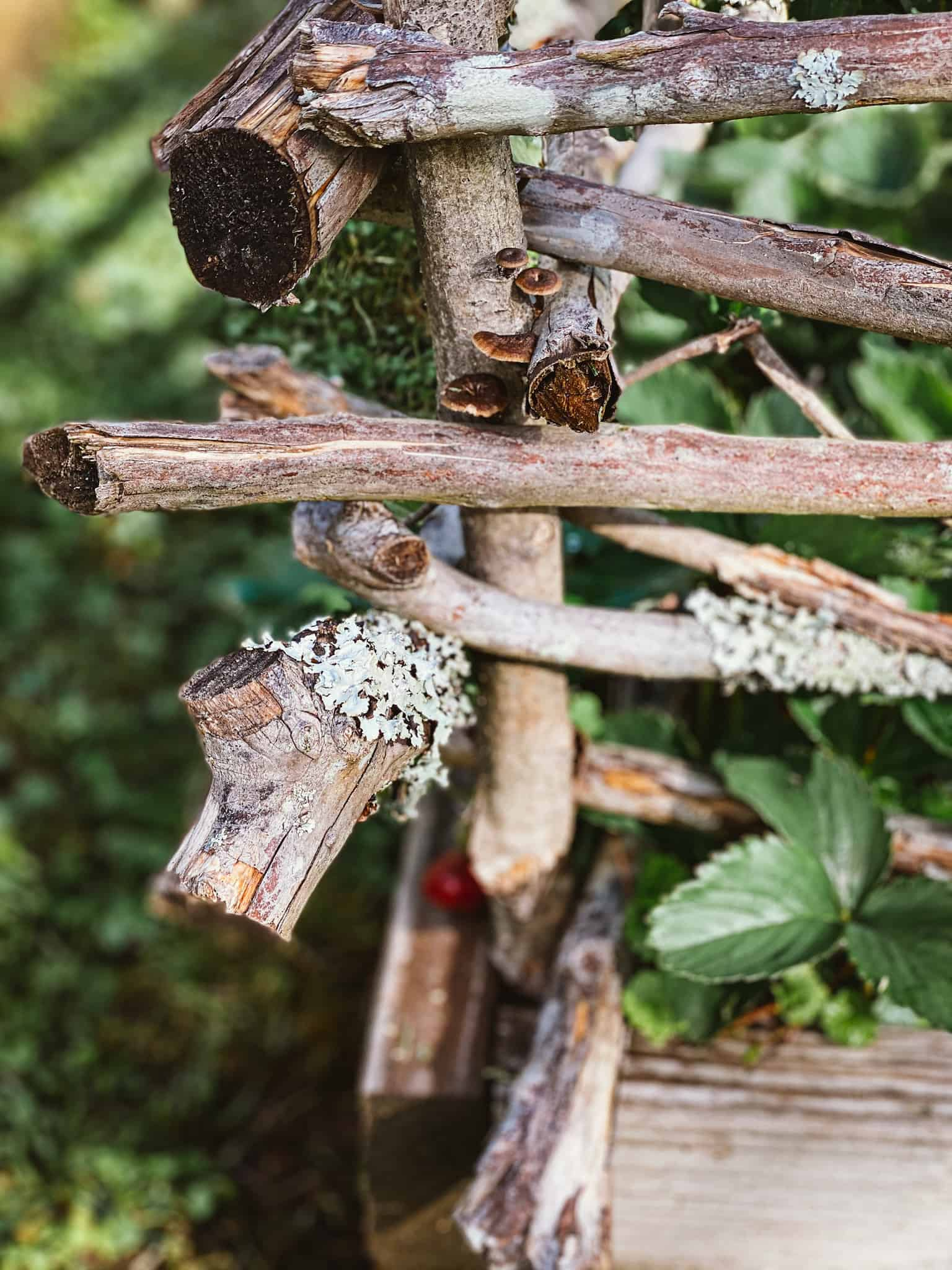 rustic wattle garden fence with lichen, mushrooms, and strawberry plants in background