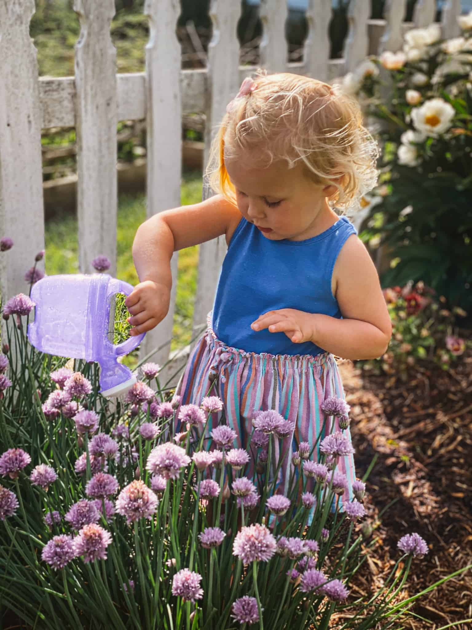 Little girl watering chives by white picket fence